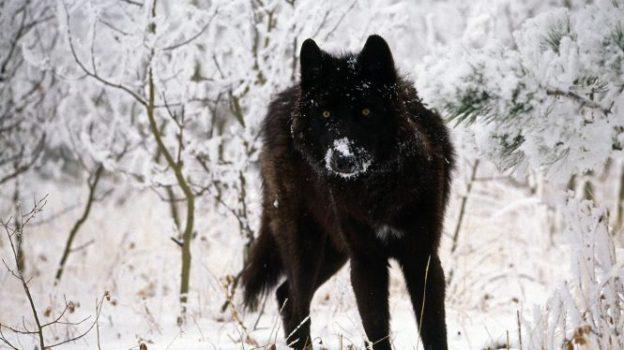 1  Mythological Wolves: Garm, Fenrir, and Loki | We Are Star