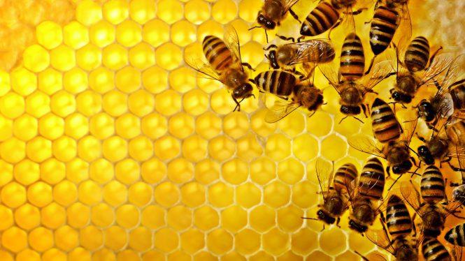 honeycomb bees