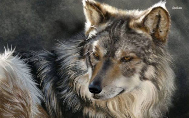 Apollo: wolf-god | We Are Star Stuff