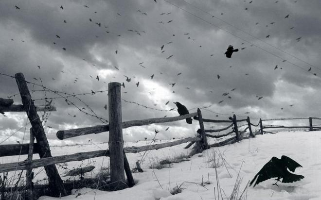 crows winter landscape