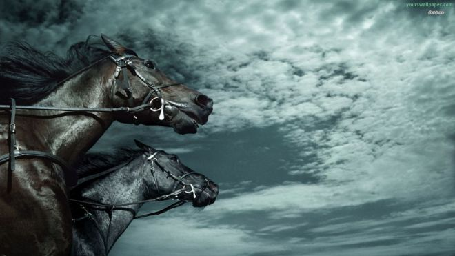 racing horses