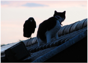 raven_and_cat