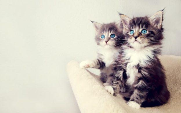 Freyja S Cats We Are Star Stuff